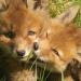 Bilder zur Sendung: Wildes Hamburg - Tiere in der Stadt