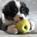Urvertrauen - das Band zwischen Mensch und Hund