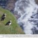 Bilder zur Sendung: Irlands Küsten