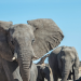 Das Geheimnis der Elefanten