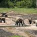 Abenteuer Urwald - Unter Gorillas