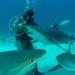 Neues aus der Hai-Society