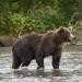 Kamtschatka - Die Abenteuer der jungen Bären