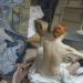 Toulouse-Lautrec - Der Tausendsassa