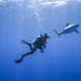Haie, gejagte Jäger