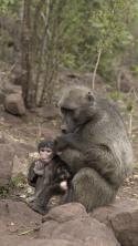 Die Kommunikation der Tiere