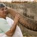Elefantenparadies Südindien - Die Mahouts von Kerala
