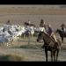 Butteri - Italiens letzte Cowboys