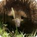Bilder zur Sendung: Australiens Nationalparks
