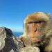 Affenwelten, Teil 2