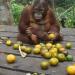 Orangutan Jungle School - Kindergarten mal anders
