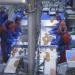 Die Lachs-Industrie