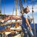 Hai-Alarm und die Ganoven-Jäger