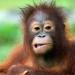 Affenwelten, Teil 3