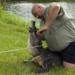 Bilder zur Sendung: Alligatorjagd in Florida