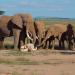 Bilder zur Sendung: Einfach clever: Wie Tiere denken
