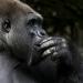 Bilder zur Sendung: Wunder der Tierwelt - Affen
