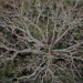Bilder zur Sendung: Das Geheimnis der Bäume
