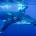 Polynesien - In den Tiefen der Südsee