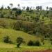 Von Covid bis Klima - Können Afrikas Wälder der Welt helfen?