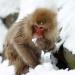 Wilde Inseln: Japan - Insel der Extreme