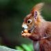 Unsere Eichhörnchen