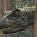Bilder zur Sendung: Das Erbe der Dinosaurier