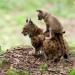 Der Böhmerwald - Eine Wildnis mitten in Europa