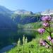 Lungau - Wildnis im Herzen der Tauern