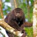 Affenwelten, Teil 1
