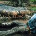 Crocodile II