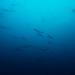 Blaues Wunder Pazifik
