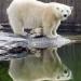 Bilder zur Sendung: Eisbär, Affe & Co