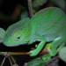 Bilder zur Sendung: Wunderwelt Erde - Madagaskar