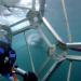 Im Angesicht des Raubtiers - Unter Haien