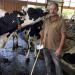Der Milchbauer vom Elkenhof