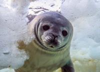 Antarktis - Leben am Limit