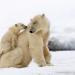 Der erste Winter - Wie Tierkinder die Kälte meistern