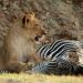 Safari-Paparazzi: Wildlife pur (3)