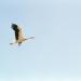 Der Flug der Störche