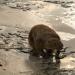 Das Eiszeit-Rätsel - Warum starben die Riesentiere aus?