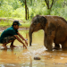 Sri Lanka - Die Insel der Elefanten