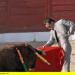 Toro, olé! - Von Menschen, Stieren und Kämpfen