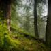 Bilder zur Sendung: Zur�ck zum Urwald - Nationalpark Kalkalpen