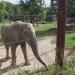 Tamo - ein Elefant wird erwachsen