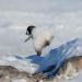 Eisbabys - Eine Kindheit in der Antarktis