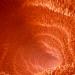 Bilder zur Sendung: Der kluge Bauch - Unser zweites Gehirn