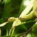Täuschen und Tarnen - Über Lebenskünstler der Natur