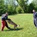 Polizeihunde - Verbrecherjagd mit Biss!