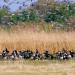 Das Vogelparadies in der Weser